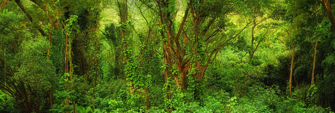 Forests of Chilapata in Dooars