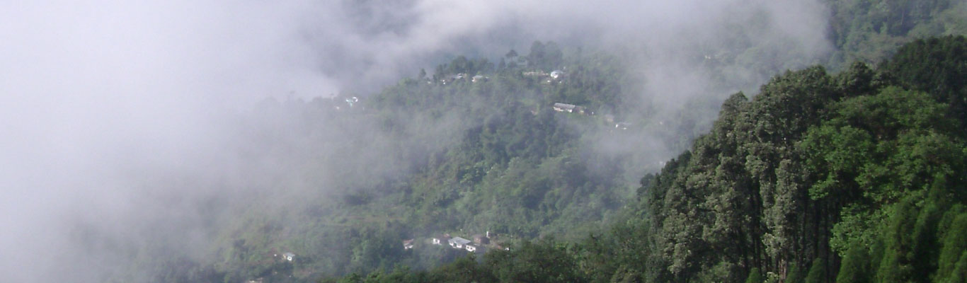 View of the forests of Latpanchar